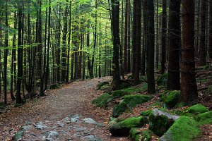 Footpath in Mountain Forest