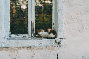 Cat sitting on the window of the old