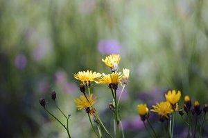 Blooming in the garden
