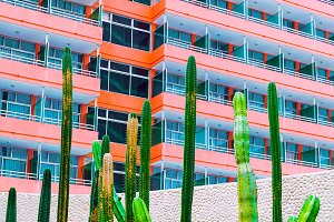 Cactus in urban location. Fashion mi