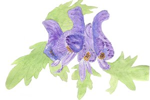 Aconitum Printable Artwork