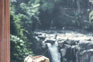 Young fresh organic coconut on a waterfall background in the jungle of Bali island.