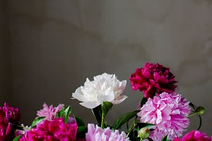 background with peonies