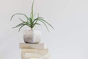 Potted Aloe on Stacked Books