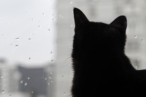 Black cat watching the raindrops