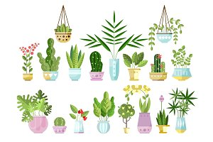 Set of flat style colorful houseplants in pots standing in line. Home decorative plants. Vector collection of indoor flowers, design elements isolated on white.