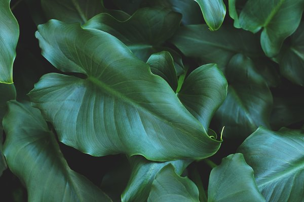 Nature Stock Photos: René Jordaan Photography - Tropical Leaves