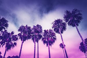 Ultraviolet palms of Santa Monica LA