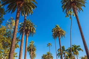 Palms of Beverly Hills