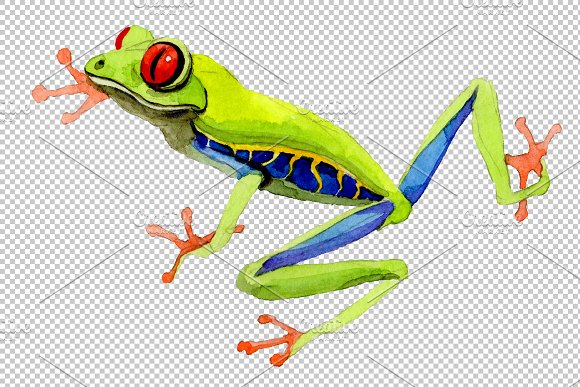 Exotic frog red-eyed PNG watercolor