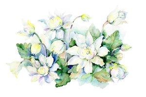Aquarelle white bouquet PNG set