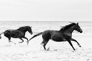 Two brown horses galopading on the seashore.