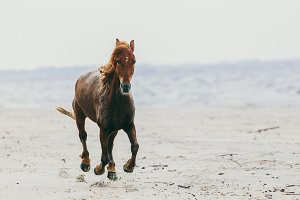 Lonely horse stepping on the sandy beach.