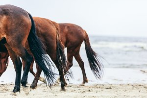 Three horse rumps on the beach in a close up.