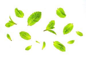 Mint leaves on white bg