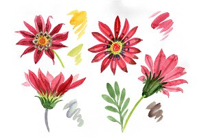 Flower red gazania PNG watercolor