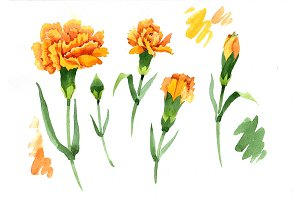 Yellow Dianthus PNG watercolor set