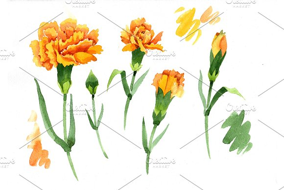 Yellow Dianthus PNG watercolor set in Illustrations