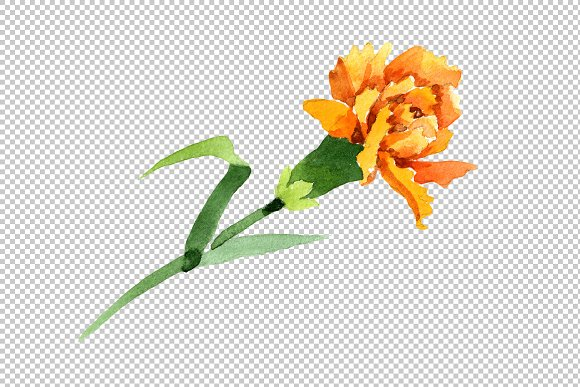 Yellow Dianthus PNG watercolor set in Illustrations - product preview 1