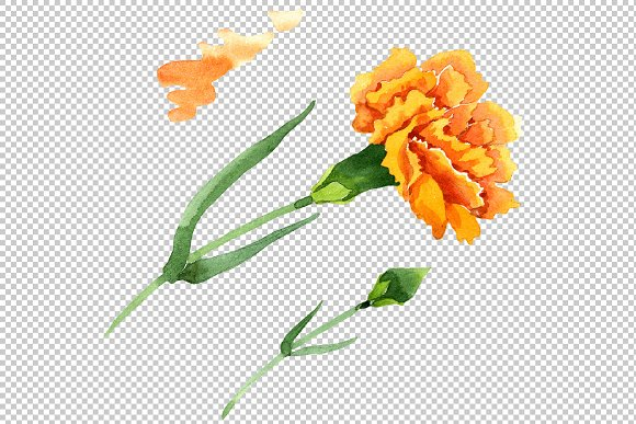 Yellow Dianthus PNG watercolor set in Illustrations - product preview 2
