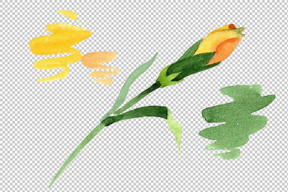 Yellow Dianthus PNG watercolor set in Illustrations - product preview 4