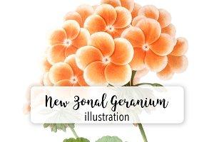Floral: Vintage New Zonal Geranium