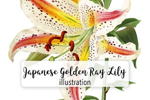 Florals: Japanese Golden Ray Lily
