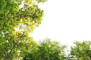 Tree Tops Sky