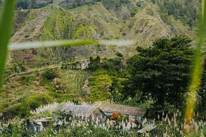 Landscape of vegetation and mountains and some local dwellings of the Paul Valley. Cultivated sugarcane, coffee and mango plants growing along valley. Santo Antao Island, Cape Verde