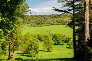 View over green farmland between two tall trees