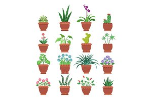 Browallia Clivia Collection Vector Illustration