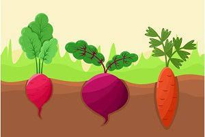 Carrot Radish and Beetroot Vector Illustration