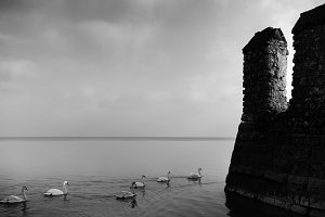 Rows of ducks in Sirmione, Lake Garda in Italy next to a medieval rock fortification - black and white fine art style
