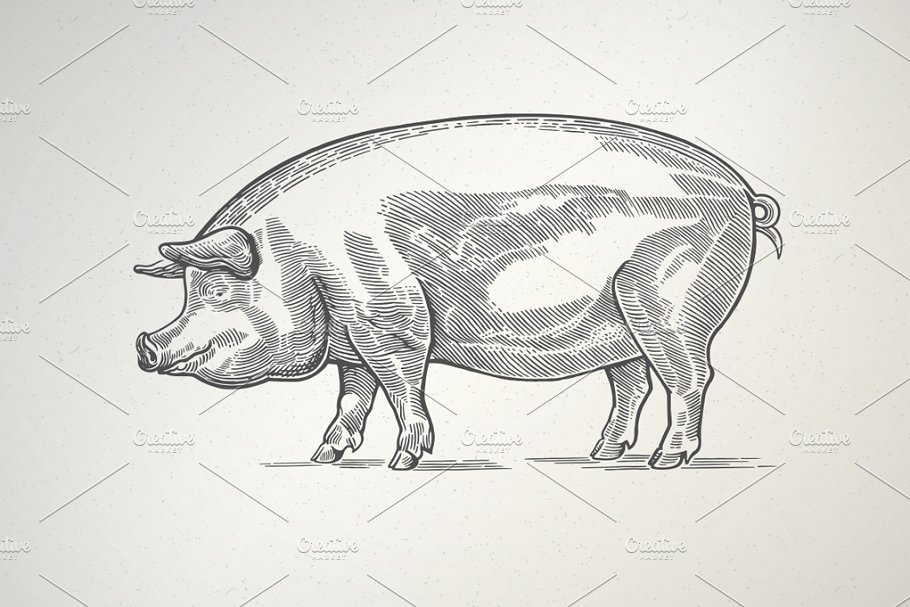 Pigs in graphical style in Illustrations - product preview 1