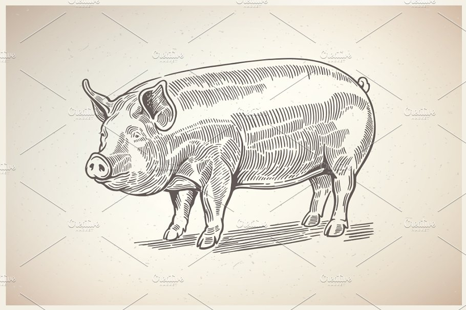 Pigs in graphical style in Illustrations - product preview 5