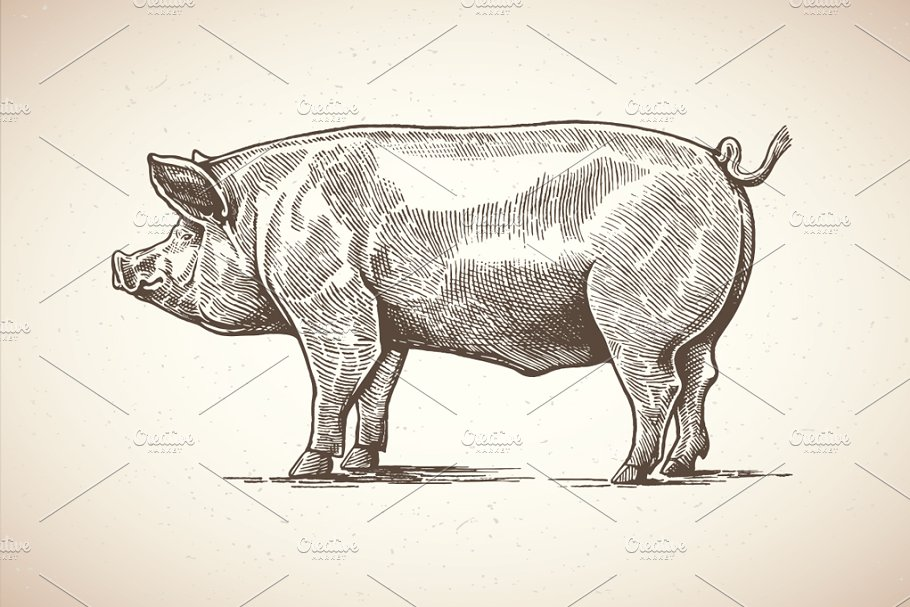 Pigs in graphical style in Illustrations - product preview 6