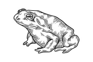 Hallucinogenic toad engraving vector illustration