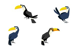 Toucan bird.