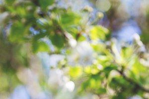 Blurry spring