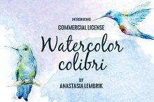 Watercolor colibri set