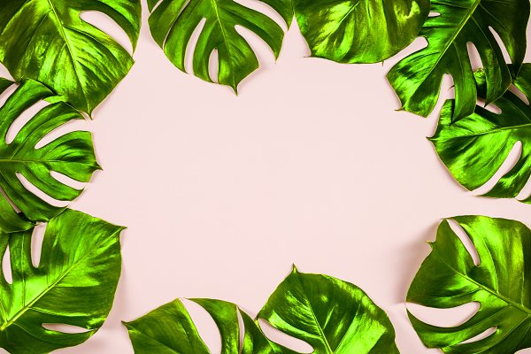 Tropical Leaves Monstera High Quality Beauty Fashion Stock Photos Creative Market Monstera leaf wall hanging, green leaf wall hanging, philodendron leaf wall art one tropical leaf, handmade using a real philodendron leaf. creative market