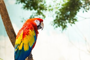 macaw(VERTICAL)