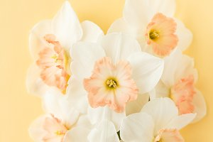 Delicate bouquet Narcissus