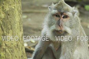 Monkeys in the forest in Bali.
