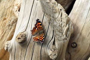 Bright beautiful butterfly sitting on the trunk of a dry tree