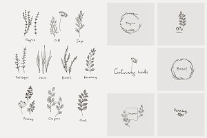 culinary herb and logo