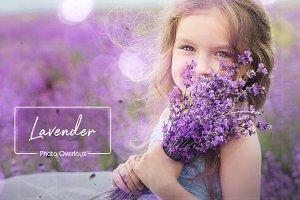 40 Lavender Overlays