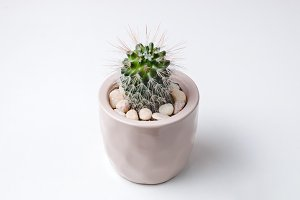 Small plant in pot succulents or cactus on white background by front view