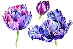 Purple tulip watercolor flowers PNG