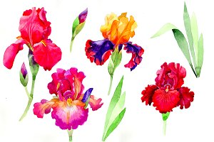 Cheerful orchids flowers PNG set